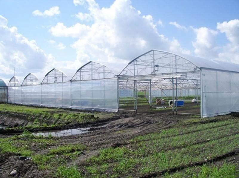 Тепличный сельскохозяйственный комплекс из ЛСТК