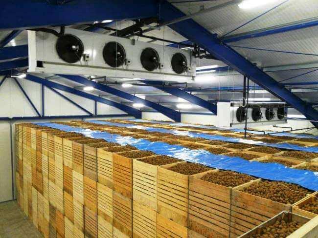 Современное овощехранилище из ЛСТК