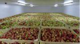 Холодильные камера для фруктов